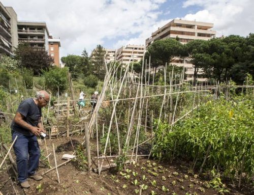FAO launches Green Cities Initiative to help transform agri-food systems, end hunger and improve nutrition