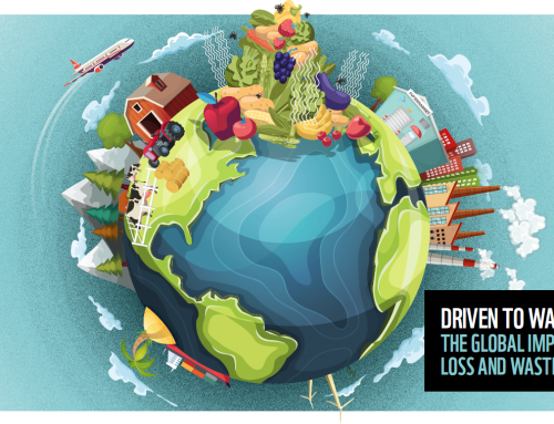 Driven to Waste: Global Food Loss on Farms